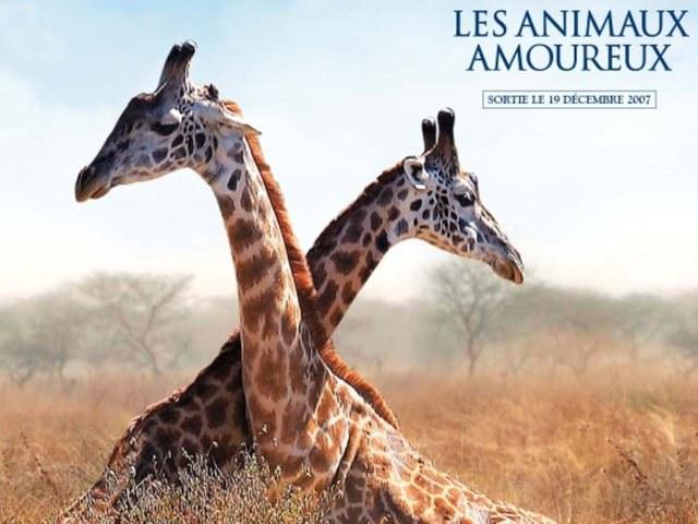 Les animaux amoreux